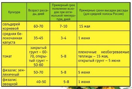Вегетационный период от всходов до появления спелых томатов составляет 95-115 дней