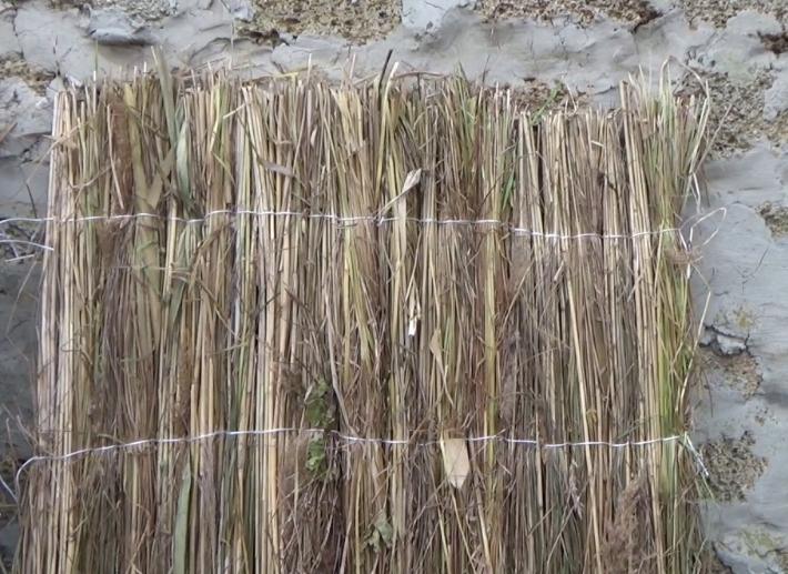Можно изготовить маты для утепления винограда самостоятельно из камыша или длинной соломы