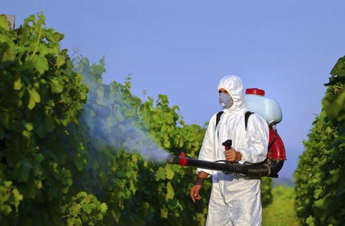 При обработке винограда нужно использовать средства защиты