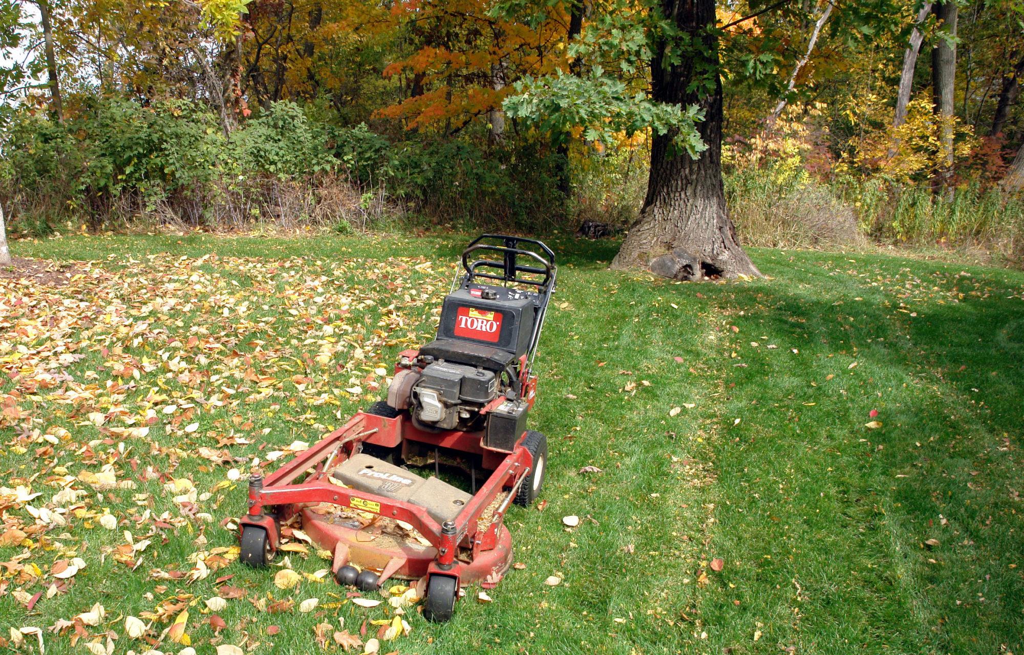 После стрижки газона обязательно нужно удалить с участка опавшую листву