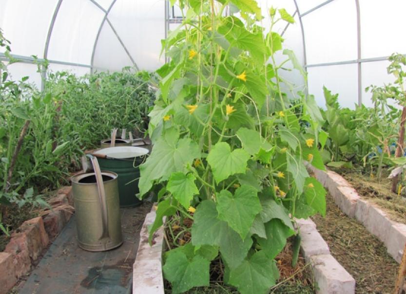 Высокорослые растения не должны закрывать солнце соседним насаждениям