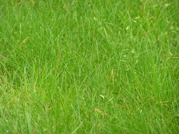 Смесь газонной травы позволяет получить плотное и прочное покрытие