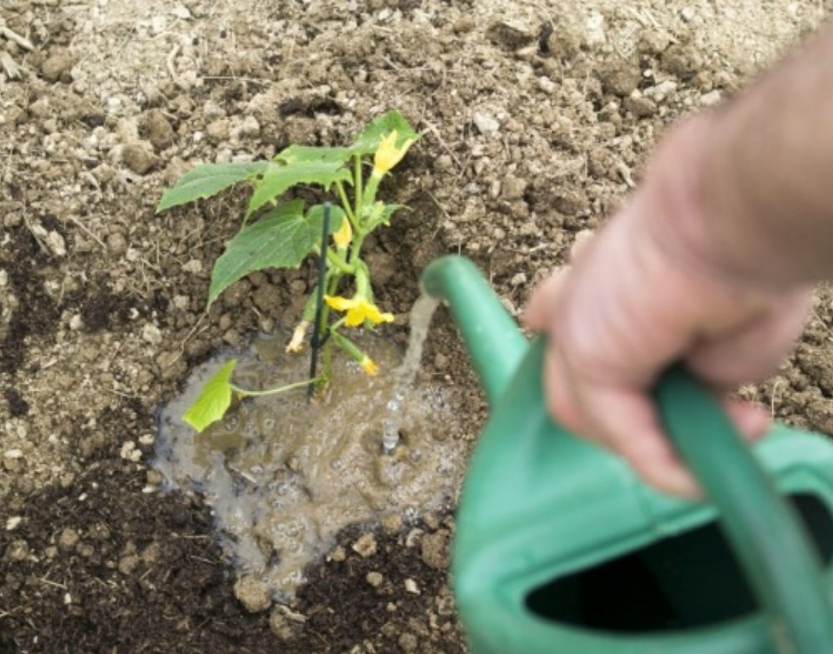 Крапива как удобрение очень полезна и может полностью заменить внесение минеральных комплексных составов