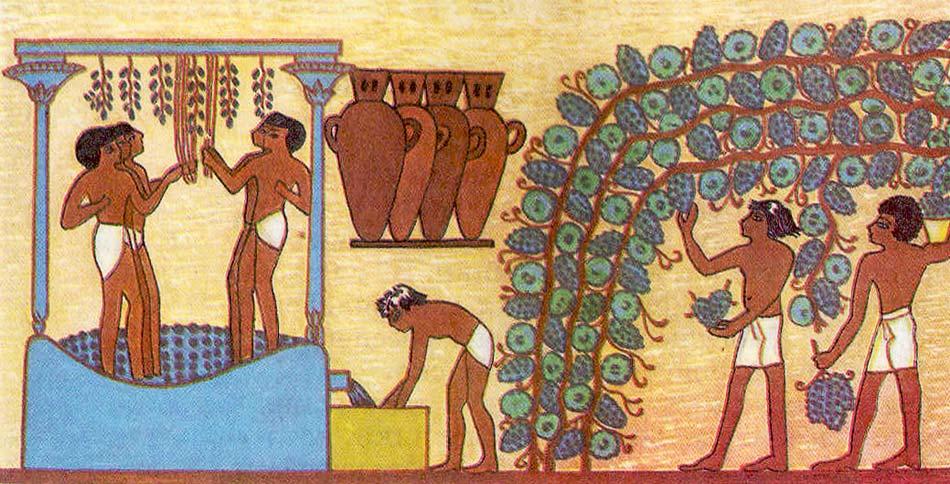 Фото: ученые установили по фрескам, что Шаслу выращивали еще в Древнем Египте