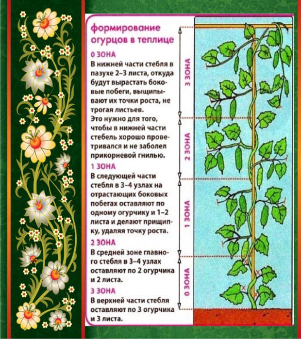 Если вовремя не прищепнуть лишние отростки, то цветение может прекратиться