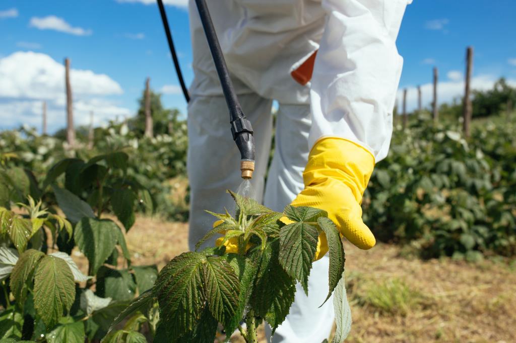 Опрыскивания помогут защитить посадки от насекомых