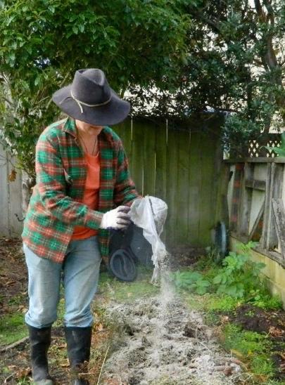 Посадка перца на каком расстоянии сажать в открытый грунт как вырастить