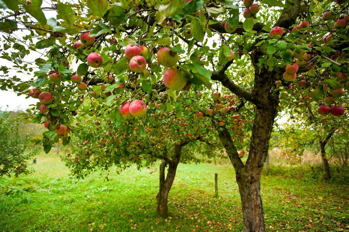 В северном климате лучше всего высаживать летние или осенние сорта