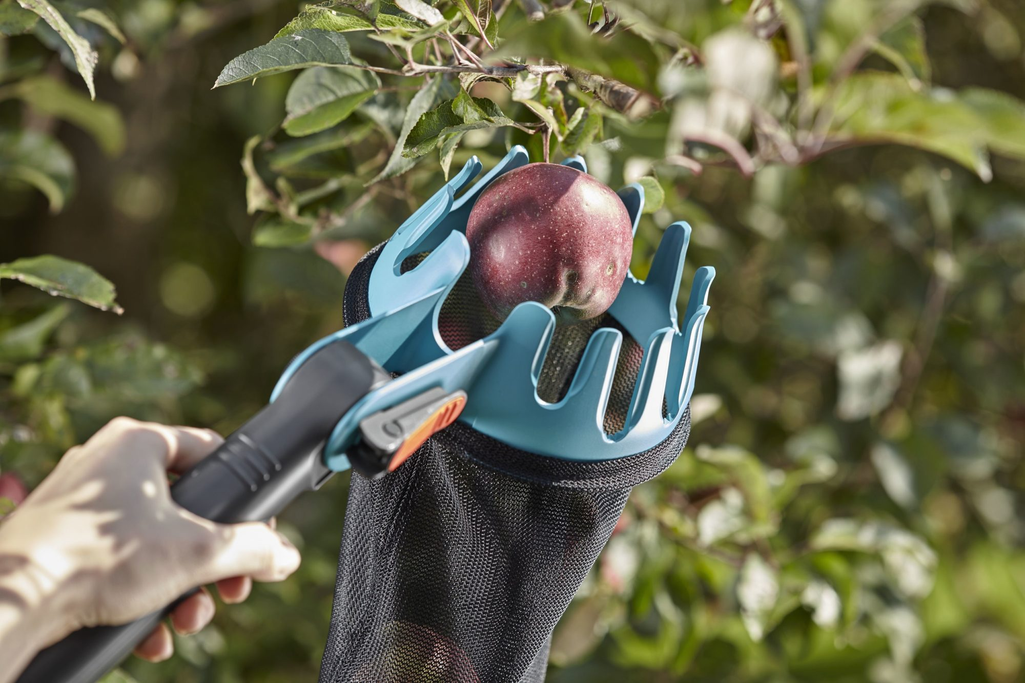 Многие садоводы для сбора урожая используются специальные плодосъемники