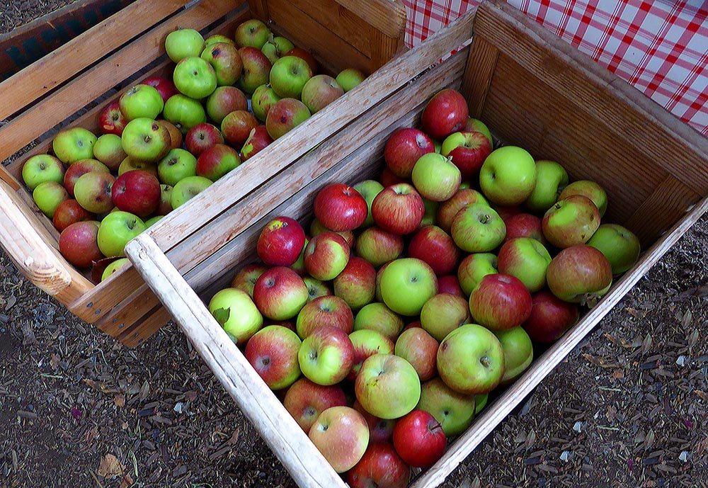 Яблоки лучше всего хранить в деревянных ящиках