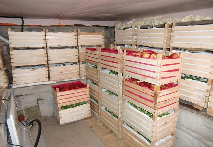 Лучшее место для хранения яблок — это подвал с правильной температурой