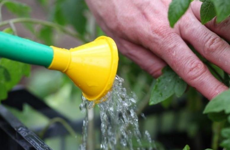 При использовании водорастворимых составов поливать следует под корень, чтобы не попадать на стебель и листья