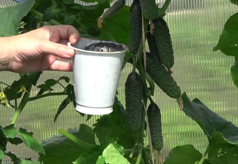 Чтобы получать хорошие урожаи, нужно обеспечивать растения необходимыми микроэлементами