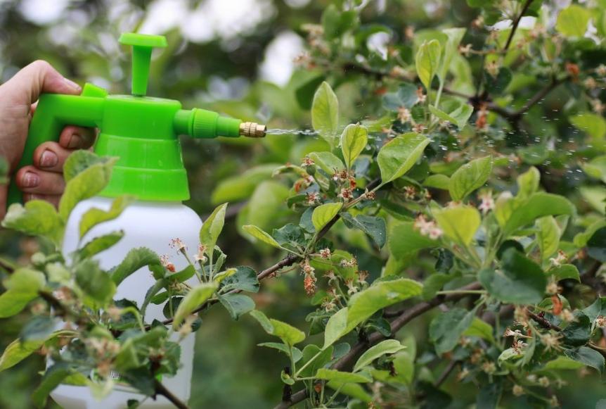 Период после цветения – наиболее благоприятный для уничтожения гусениц яблонной моли