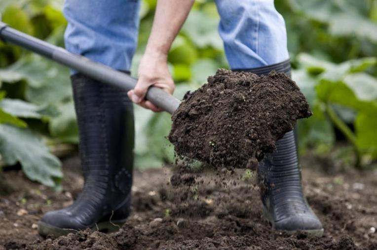 Готовить почву несложно, если знать все нюансы