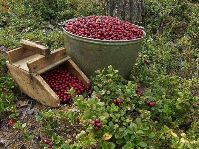 С приходом осени начинается активный сбор урожая
