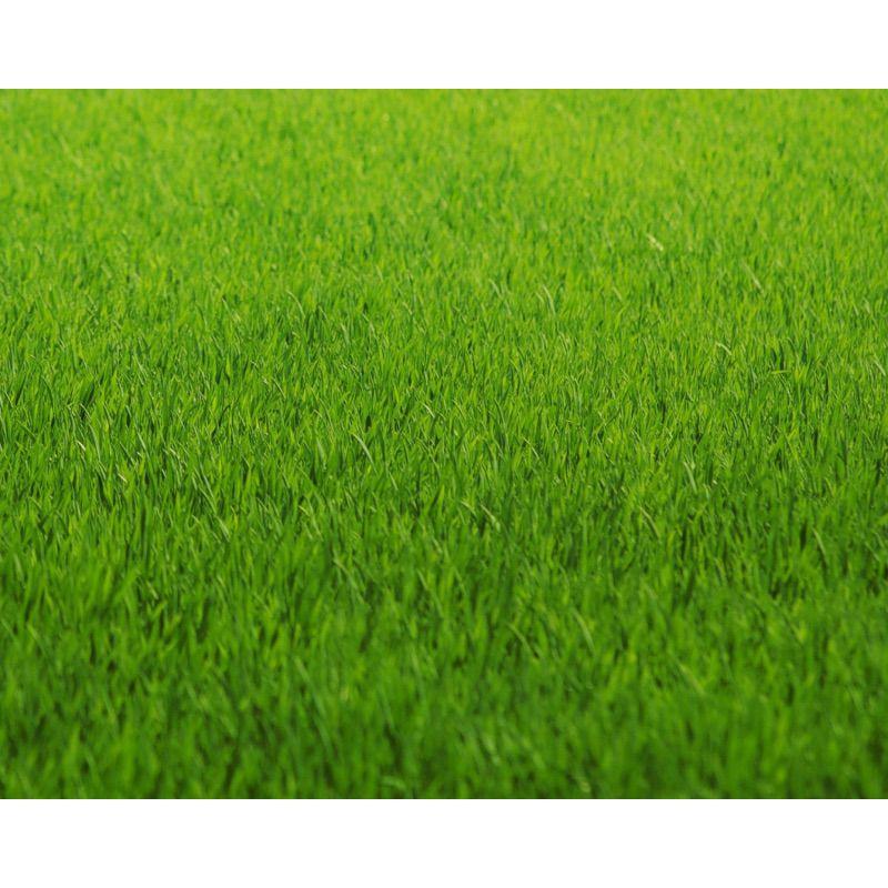 Зеленая мягкая поверхность газона устойчива к вытаптыванию