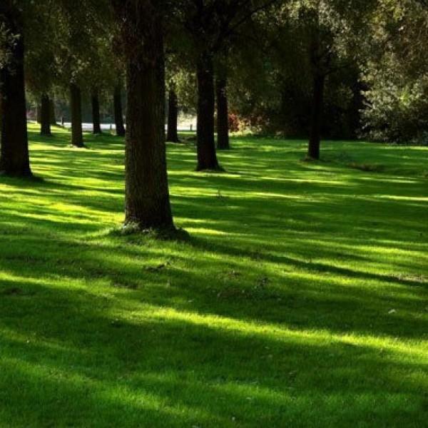 Ровность поверхности достигается правильным подбором трав