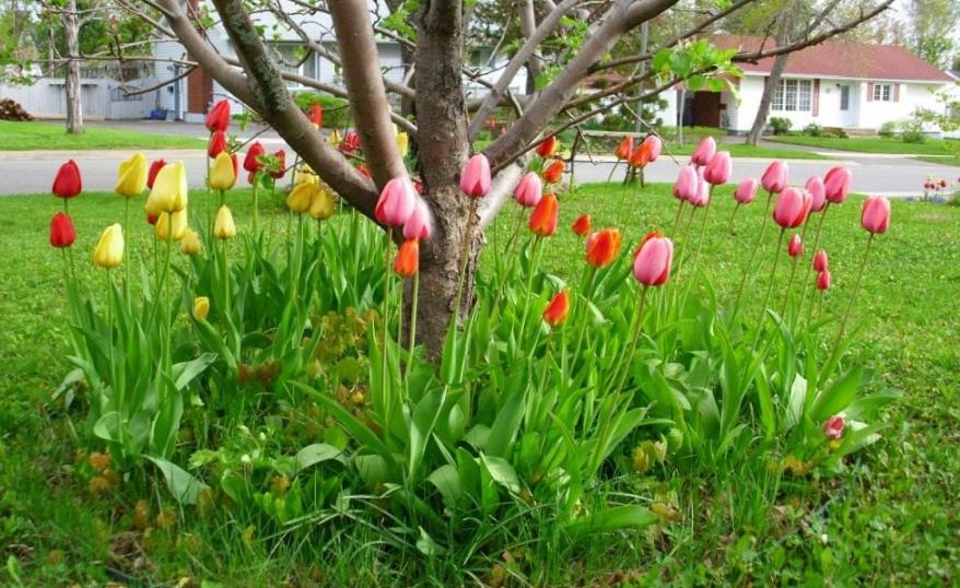 Цветы – одно из самых популярных решений при посадке вокруг ствола