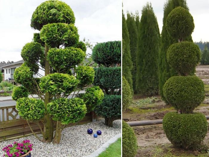 При грамотной обрезке из хвойников получается шикарное, вечнозеленое украшение для сада