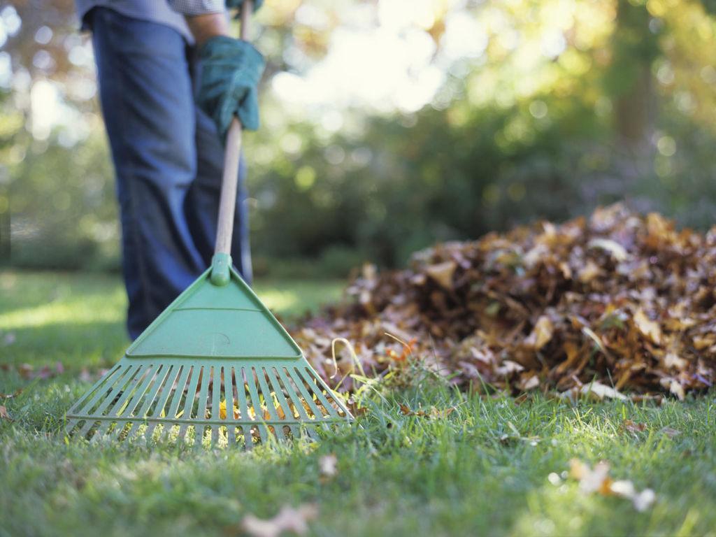 Регулярная уборка участка – залог его сохранности от нашествия вредителей