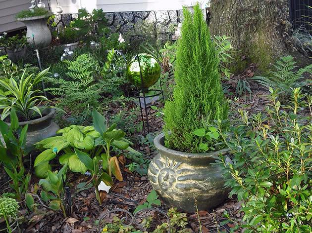 В северных регионах кипарисник возможно вырастить только в кадке, которая на зиму убирается в помещение.