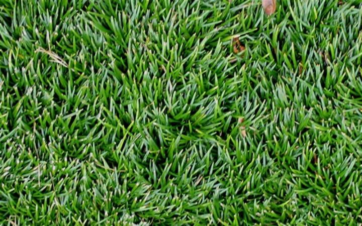 Низкорослый газон как альтернатива борьбы с сорняками