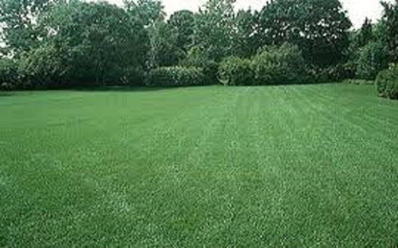 Ровный газон без сорняков из смеси трав