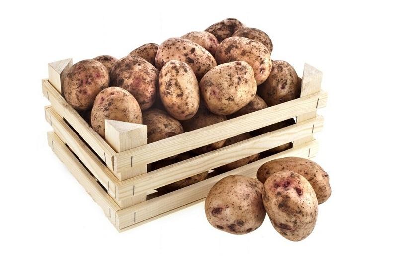 Хранить картофель нужно в сухом, проветриваемом и темном месте