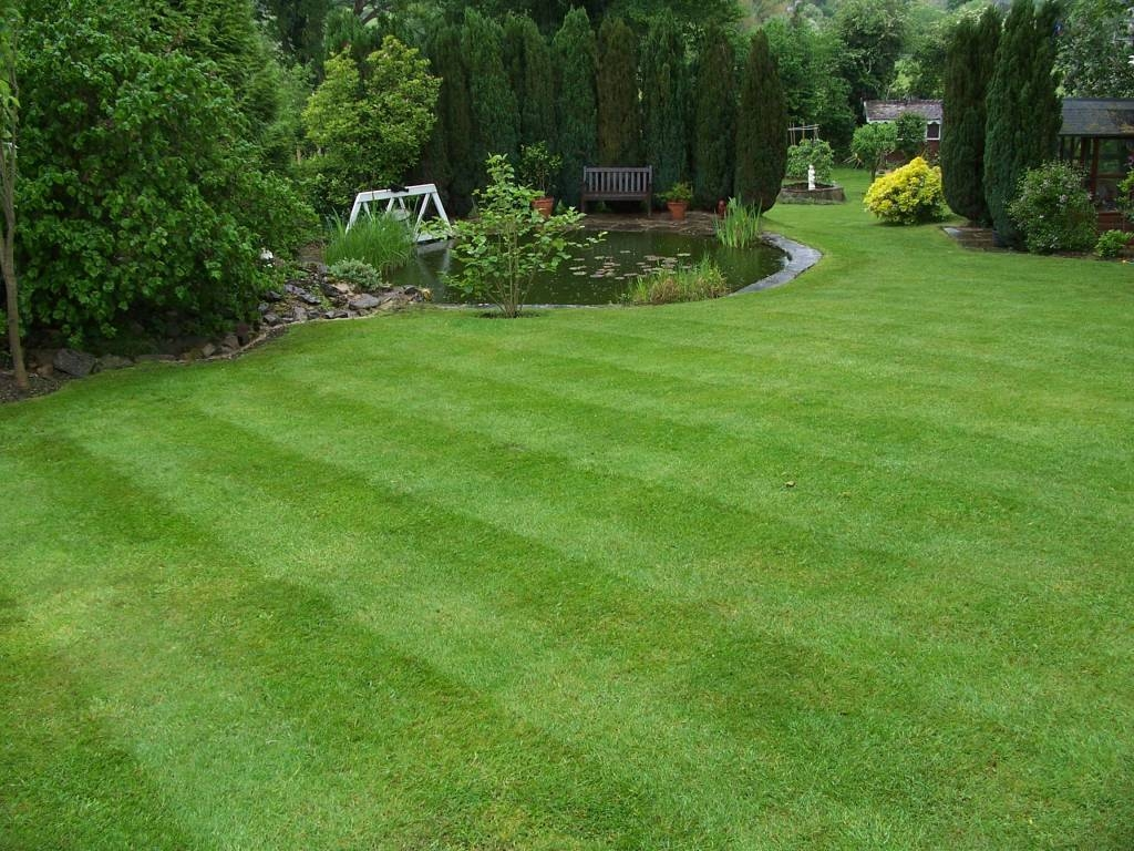 Выбор газона основывается на следующих факторах: расположение, предназначение, высота
