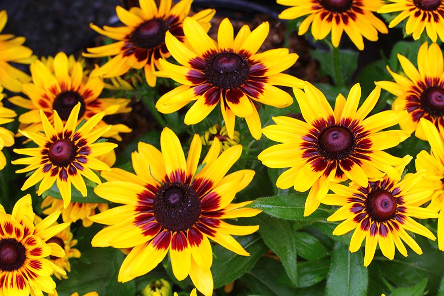 На фото — словно солнечные зайчики разлились цветы по поляне