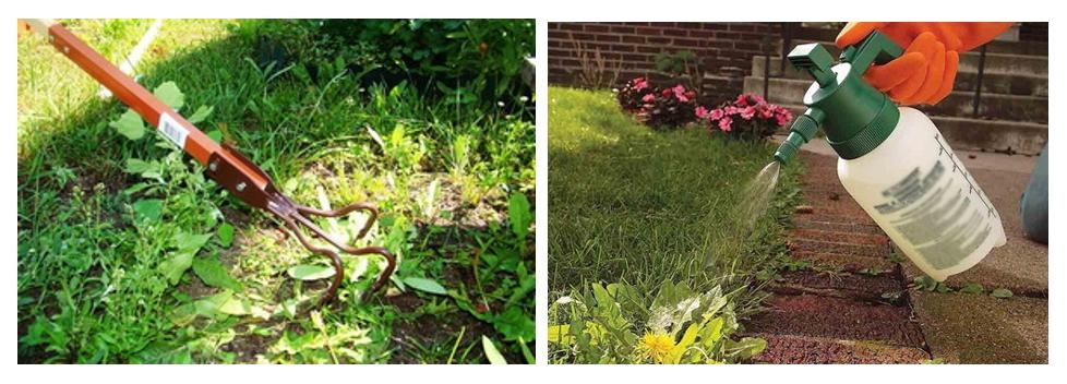 С сорняками на садовом участке бороться можно и нужно. Избавляются от них по-разному, иногда и химическим способом. Главное — оценить, действительно ли нужны химикаты, чтобы минимизировать ущерб для культурных растений