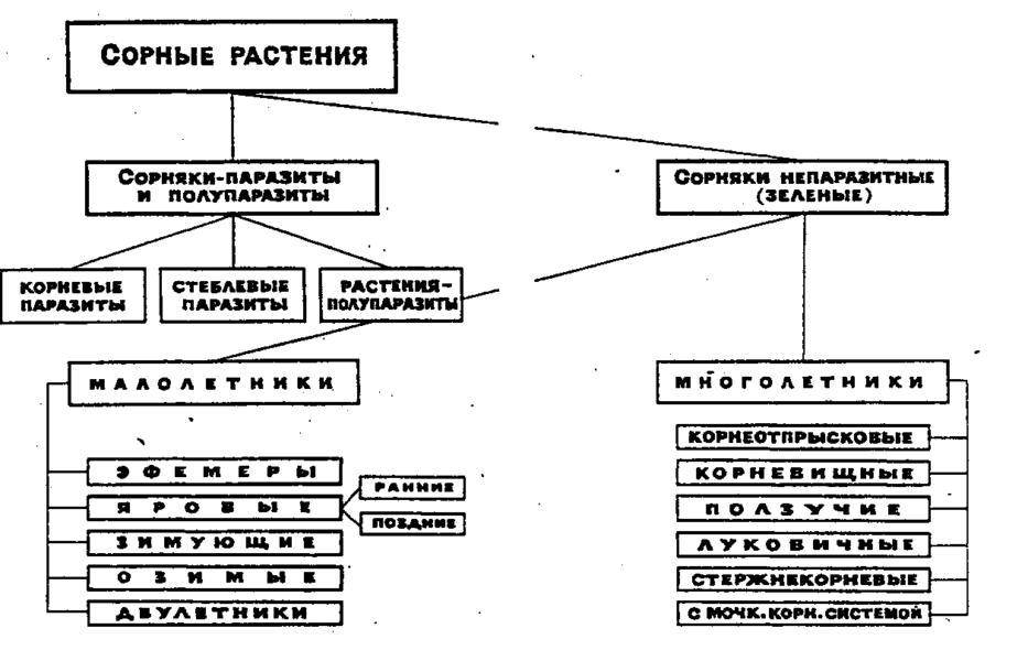 Схема содержит все виды сорняков